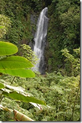 Dominica rt  (150) (681x1024)