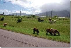 St Kitts (56) (1024x681)