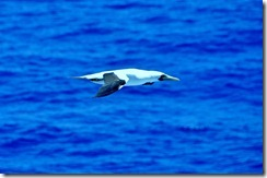 Jan 25th at Sea  (28) (1024x680)