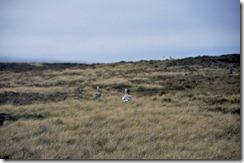 Falklands Feb 10 (37) (1024x679)
