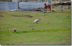 Falklands Feb 10 (44) (1024x643)