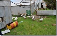 Falklands Feb 10 (46) (1024x635)