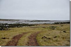 Falklands Feb 10 (54) (1024x671)