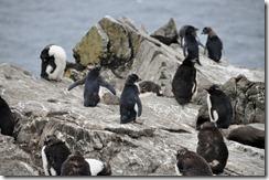 Falklands Feb 10 (59)