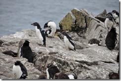 Falklands Feb 10 (63)