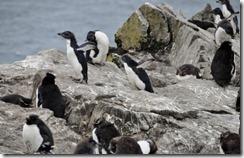 Falklands Feb 10 (64) (1024x658)