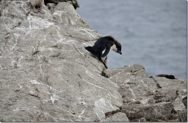 Falklands Feb 10 (73)