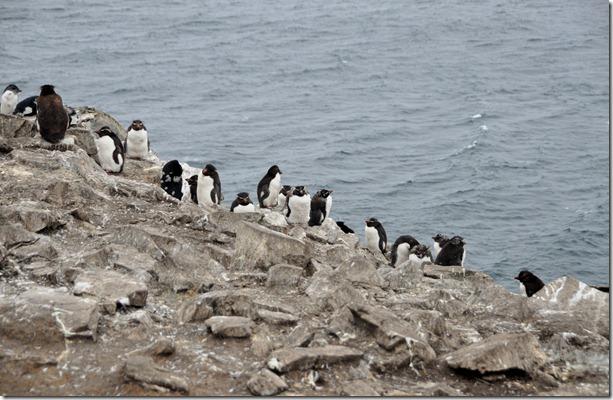 Falklands Feb 10 (81)