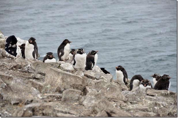 Falklands Feb 10 (88)