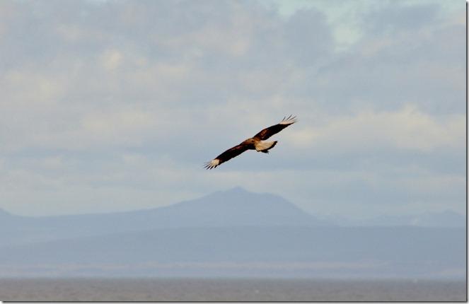 Punta Arenas  (154) (1024x662)