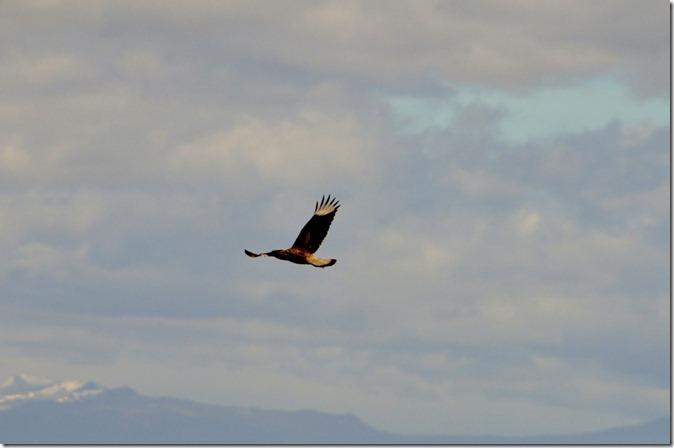 Punta Arenas  (160) (1024x680)