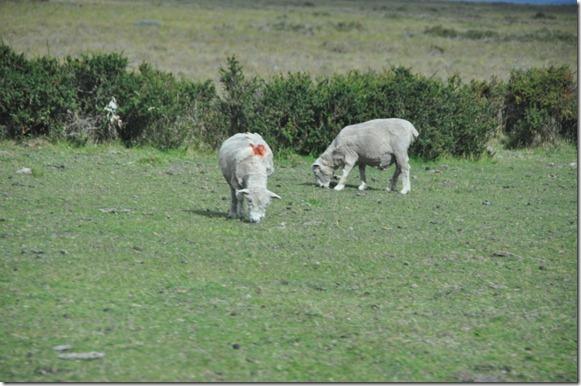 Punta Arenas  (38) (1024x680)
