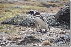 Punta Arenas  (50) (1024x680)