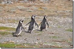 Punta Arenas  (53) (1024x680)