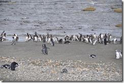 Punta Arenas  (54) (1024x680)