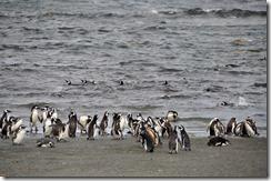 Punta Arenas  (69) (1024x678)