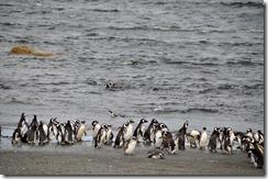 Punta Arenas  (77) (1024x679)