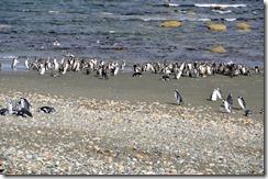 Punta Arenas  (81) (1024x679)