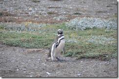Punta Arenas  (96) (1024x680)