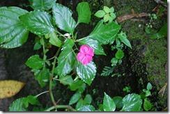 Dominica rt  (170) (1280x851)