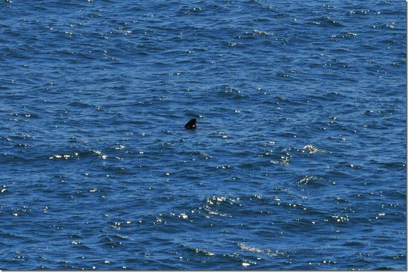 Sea Views (3) (1024x682)