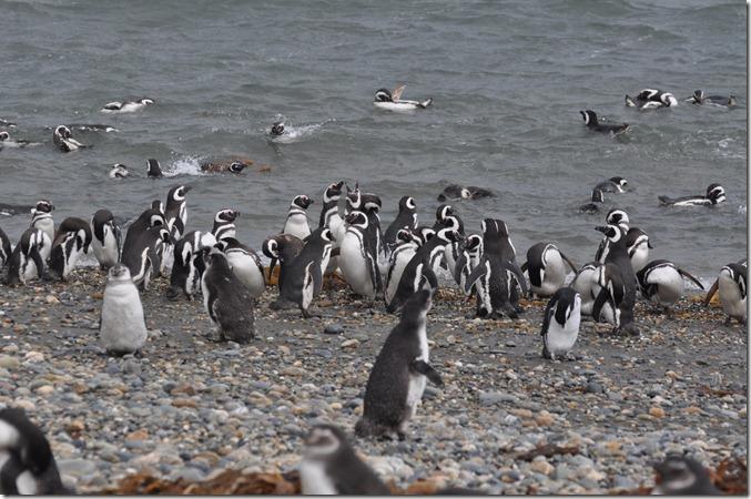 Punta Arenas 2 (172) (1280x850)