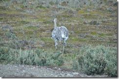 Punta Arenas  (209) (1280x850)