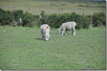 Punta Arenas  (38) (1280x850)
