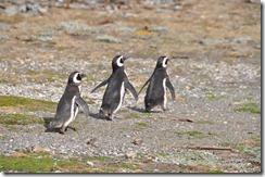 Punta Arenas  (53) (1280x850)