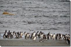 Punta Arenas  (77) (1280x847)