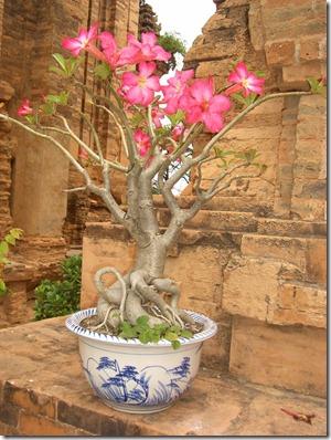 March 8th Vietnam Nha Trang day 052 (960x1280)